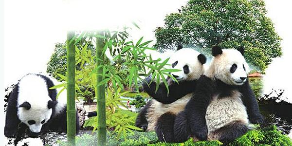四川人事信息网_你好熊猫_熊猫新闻_熊猫图片