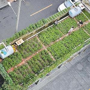 """綠色低碳新風尚 成都社區裏的""""環保菜園"""""""