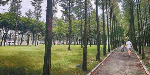 公園下鄉森林進城 四川探路城鄉一體綠化