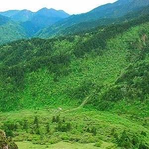四川計劃森林覆蓋率4年提高3個百分點 底氣從何來?