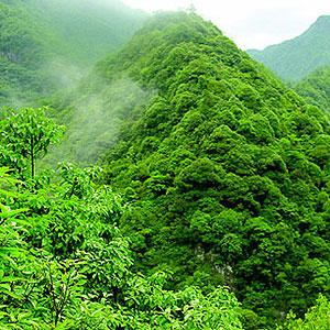四川完善集體林權制度 圍繞六大任務實現資源增長林農增收