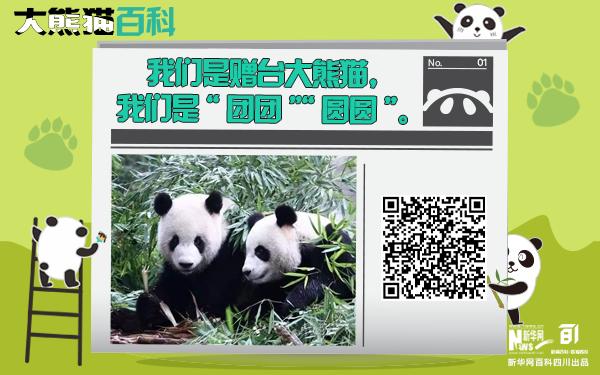"""大熊貓百科丨牽起兩岸情的""""團團""""""""圓圓"""""""