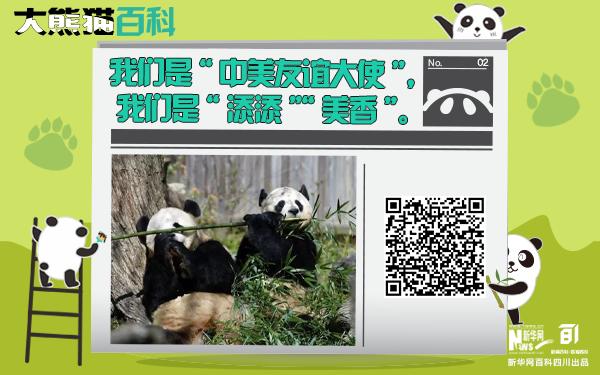 """大熊貓百科丨""""中美友誼大使""""""""添添""""""""美香"""""""