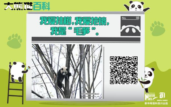 """大熊貓百科丨挂在樹上的""""毛筍"""""""