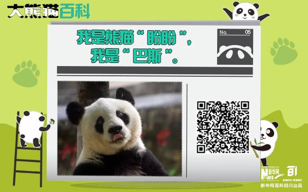 """大熊貓百科丨謝謝你""""盼盼"""",再見""""巴斯"""""""