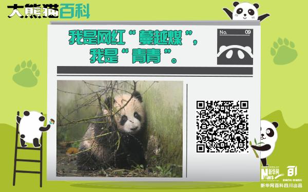 """大熊貓百科丨蔓越煤""""青青"""""""