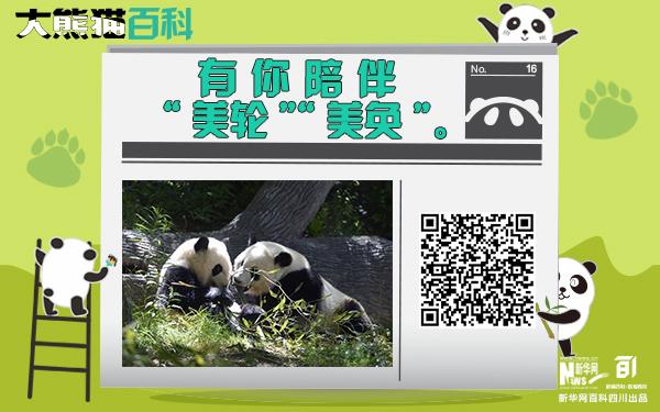"""大熊貓百科丨有你陪伴""""美輪""""""""美奐"""""""