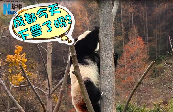 新华网短视频丨吾日三省吾身:成都今天下雪了吗?