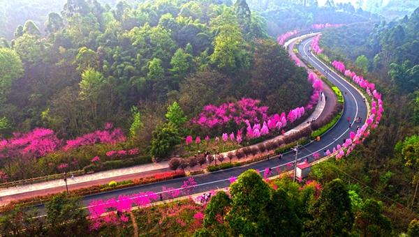 新華網航拍:春到樂山城 花漫綠心路