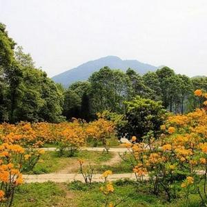 成都新增兩家國家4A級旅遊景區:丹景山 花溪谷景區