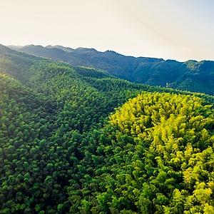 四川最大森林碳匯項目 7年多人工造林6萬畝