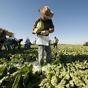 四川省就业政策和服务将向农民延伸 到2020年力争农村劳动力转移就业2300万人左右