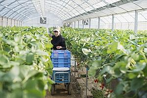 四川分層分級培養農業職業經理人 享有産業、社保、金融等扶持