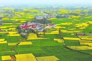 成都實施鄉村振興戰略 促進農商文旅融合發展新業態
