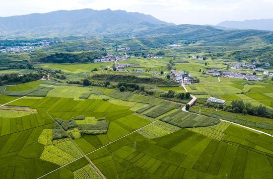會東姜州鎮:農業、畜牧業、旅遊業因地制宜謀發展