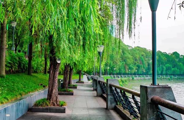 新理念下的成都④|公園城市 綠意盎然