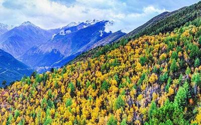20年來四川省累計還林還草3994萬畝 位居全國第三