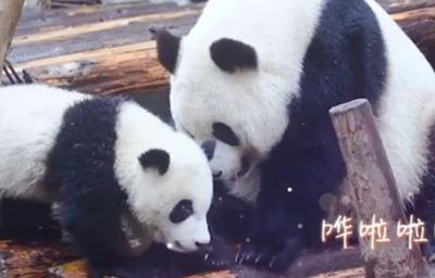 熊貓媽媽也要母親節快樂哦