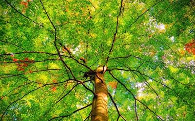 國社@四川|川渝聯合打擊跨省市生態環境違法犯罪