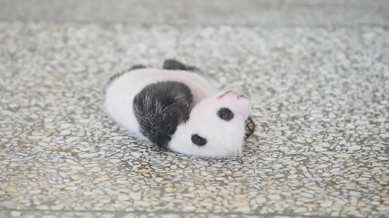 熊貓寶寶在線營業
