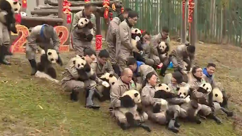 大熊貓寶寶集體給你拜!年!啦!