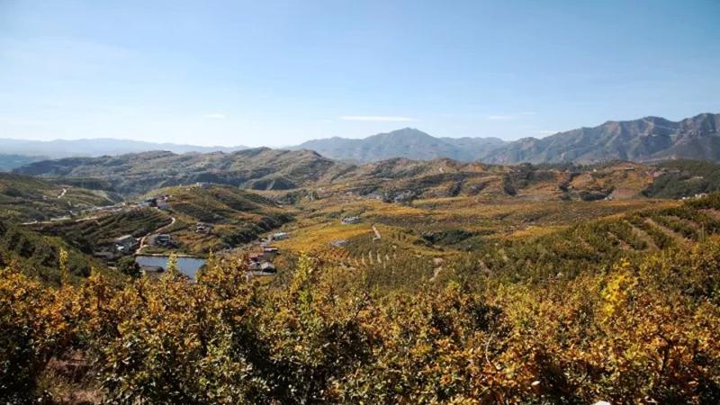 國社@四川|銅礦村不靠銅了——涼山蹲點見聞