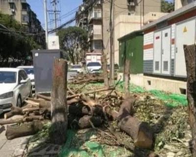 成都青羊區桂花巷部分行道樹被砍事件 處理結果公布 多方被追責