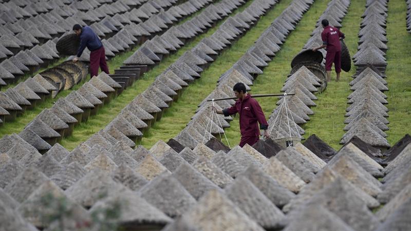 四川瀘州:傳承百年醬油曬露釀造技藝