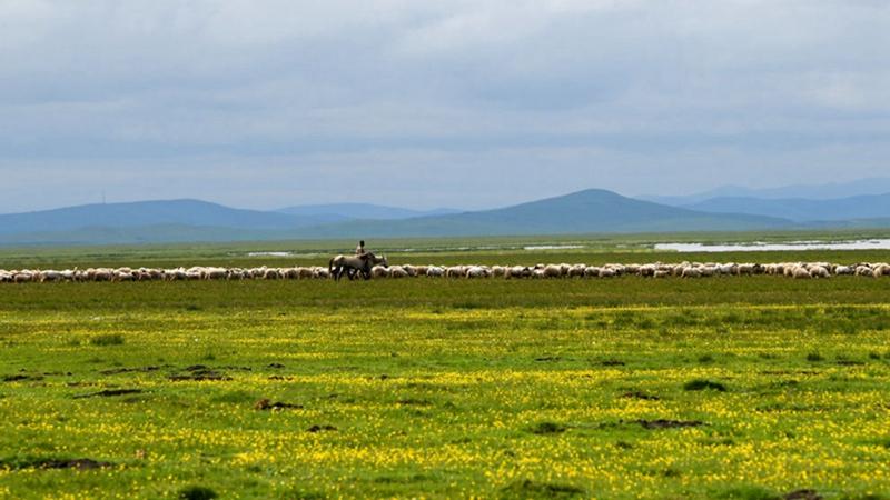 國社@四川|酥油茶香溢滿鮮花盛開的草地:寫在四川涉藏地區全面脫貧之際