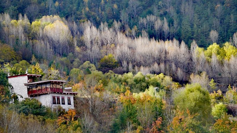 藏寨、碉樓、彩林 丹巴秋色美如畫