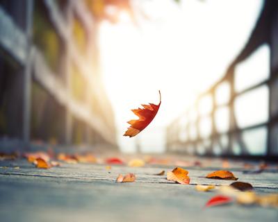 歌曲《無別離》:漸覺今秋時光好 方懂相隨無別離