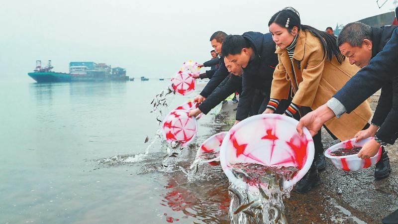 瀘州:14萬余尾魚苗入長江