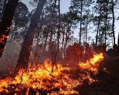 今冬明春防火形勢為何嚴峻?