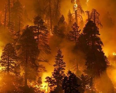 四川將建立健全森林草原防滅火群防群治末端發力工作機制